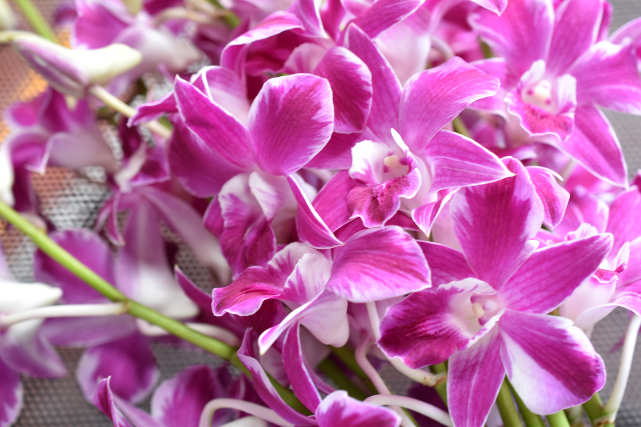 How To Care Of Your Cut Orchids Thai Orchids Exporter