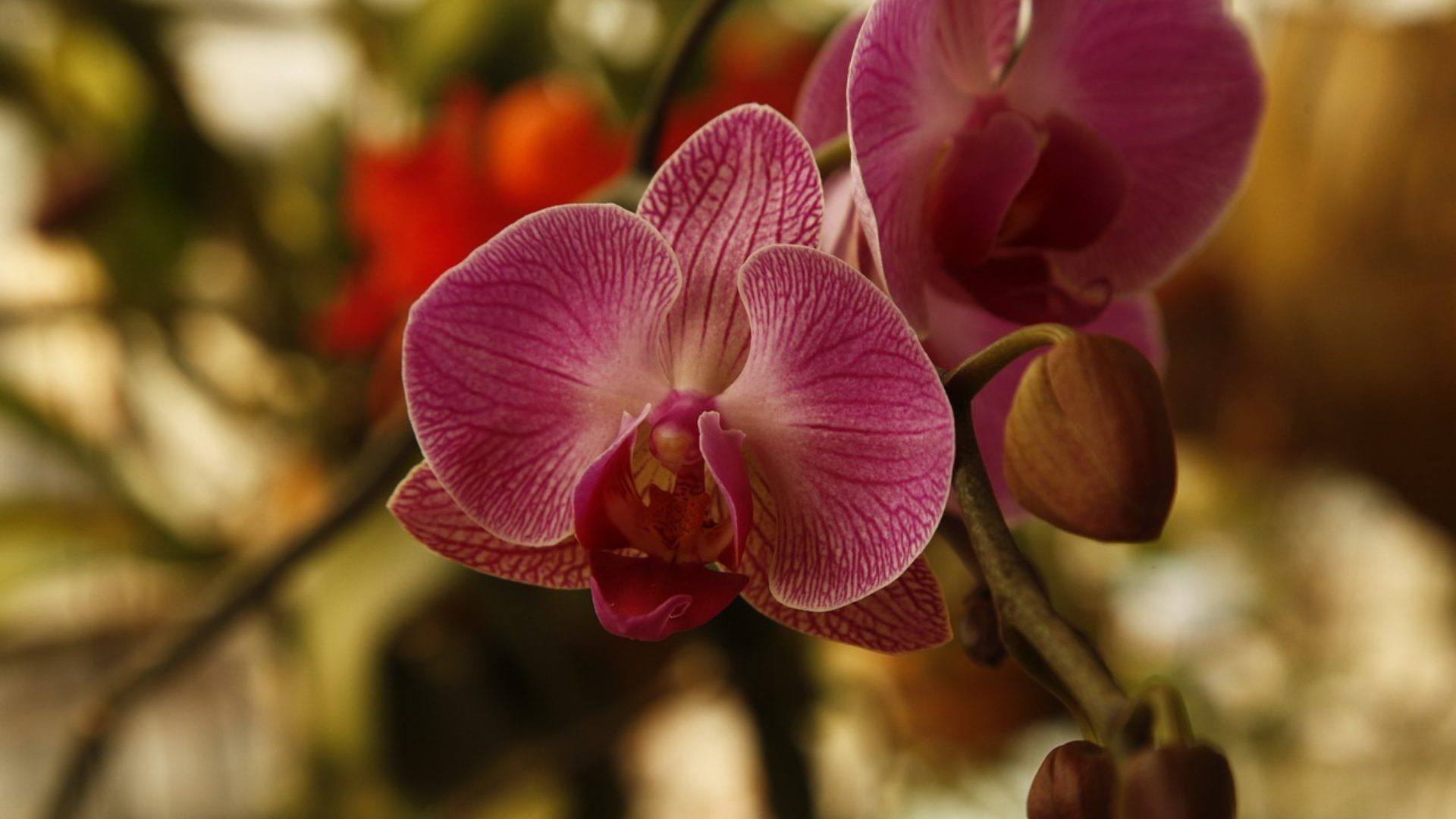 Premium Quality Orchids Grower and Exporter from Thailand